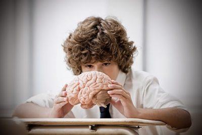 crianza y desarrollo cerebral