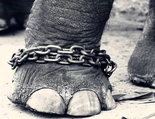 La enseñanza del elefante encadenado